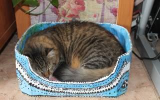 Уход за котом после наркоза или операции