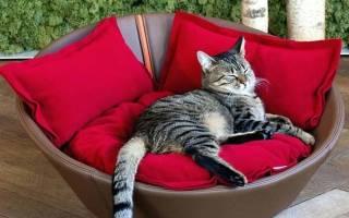 Делаем диван для кошки своими руками