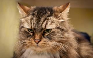 Какая норма сахара в крови у котов