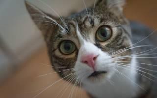 Почему у кошки мокрый нос причины