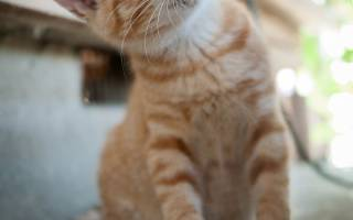Что нужно сделать если кошка убежала из дома