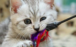 Опасные игрушки для котов