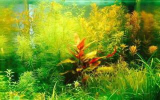 Как ухаживать за домашним аквариумом?