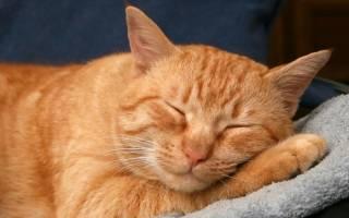 Почему коты мурчат когда их гладишь