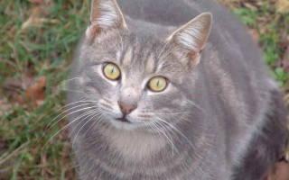 Что делать если у беременной кошки понос