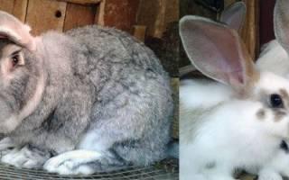 Клетки для кроликов. Критерии выбора