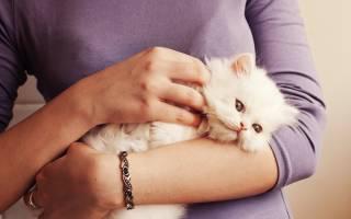 ТОП 10 причин выкидыша у кошки