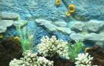 Как клеить на аквариум фон