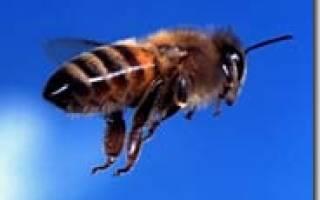 Как стать пчеловодом с чего начать видео