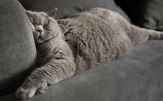 Почему кошки любят спать в ногах вашей постели