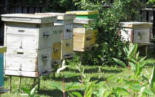 Технология содержания пчел в ульях Дадана