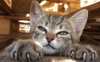 Как подстричь когти кошке если она вырывается