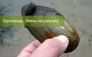 Ловля на перловицу советы рыбаков