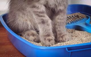 Как лечить диарею у кошки