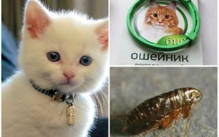 Ошейник от блох для кошек и котят