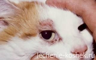 Демодекоз у кошек — симптомы и лечение