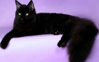 Чрные кошки мистические и обаятельные