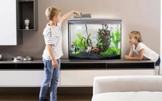 Как и сколько раз кормить рыбок в аквариуме?