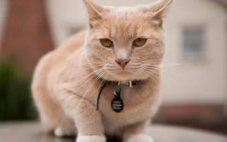 Нобивак для кошек: инструкция к применению