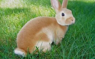 Почему болеют декоративные кролики