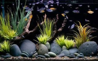 Самые распространенные камни в аквариумистике