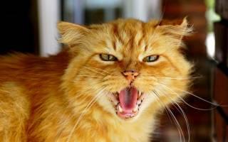 Любовь и месть: как понять кошку — Подробности