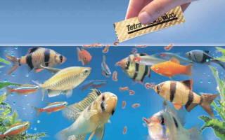 Сколько раз надо кормить рыбок в аквариуме