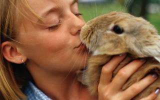 Что делать если укусил кролик