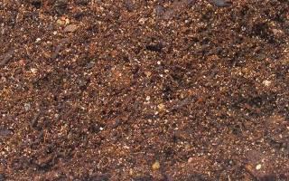Грунт для террариума мох