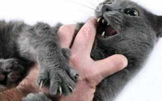 Столбняк инфекционное заболевание у кошек
