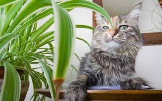 Как отучить кошку грызть цветы