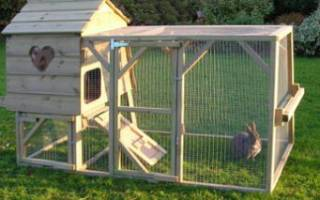 Падж кроликов самые частые причины