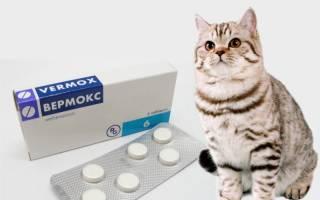 Как давать вермокс коту — Паразиты человека