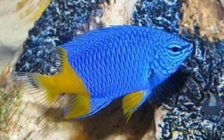 Морские рыбки для аквариума