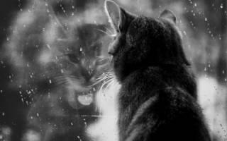 Почему кошки уходят из дома перед смертью?