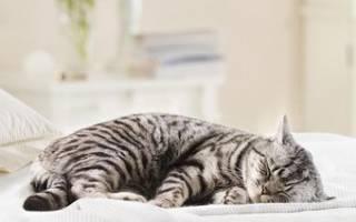 Почему кошка храпит во сне и что делать?