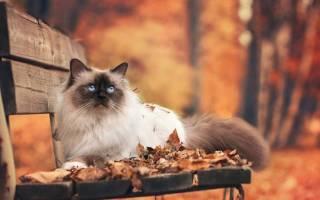 Как узнать характер кошки по окрасу
