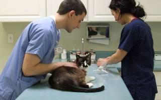 Когда можно кормить кота после наркоза