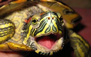 Вс о содержании морских черепах в квартире