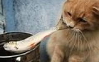Дипилидиоз у кошек заражение огуречным цепнем