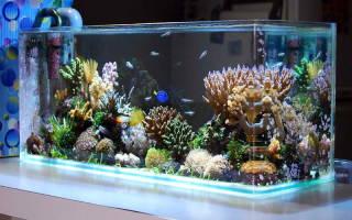 Оборудование для морского аквариума