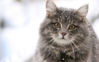 Кошки и интересные факты про них