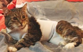 Как распознать рак молочной железы у кошки