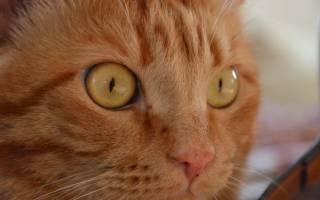 У кота выделения из глаз