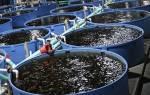 Технология производства продукции рыбоводства.