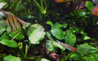 Почему в аквариуме гниют растения