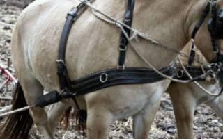 Рабочие качества лошадей