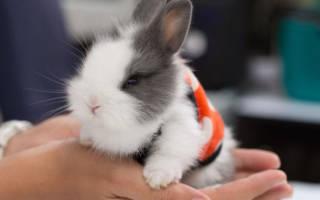 У кролика кровь из носа что делать