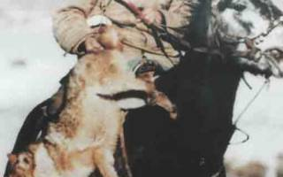 Традиционная охота с борзыми на волка