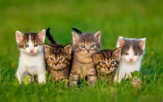 Возраст котнка разгадываем тайну
